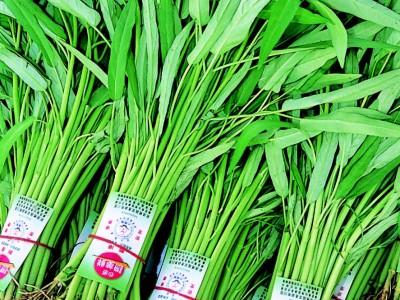 食譜-如何選購蔬菜--摘自《譚敦慈的安心廚房食典》