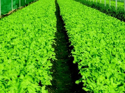 食譜-蔬菜的無毒料理法--摘自《譚敦慈的安心廚房食典》